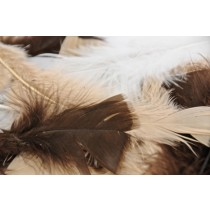 Animal Turkey Feathers Multi (PK 250)
